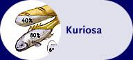 Kuriosa